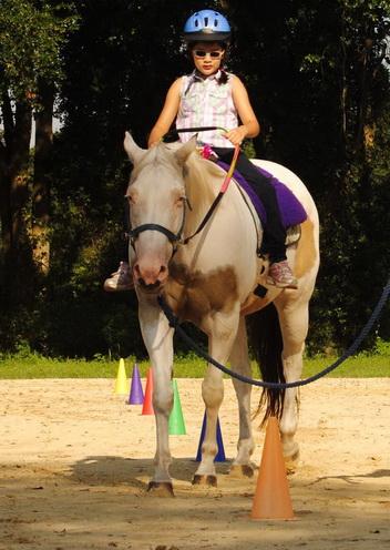 reno therapy horse